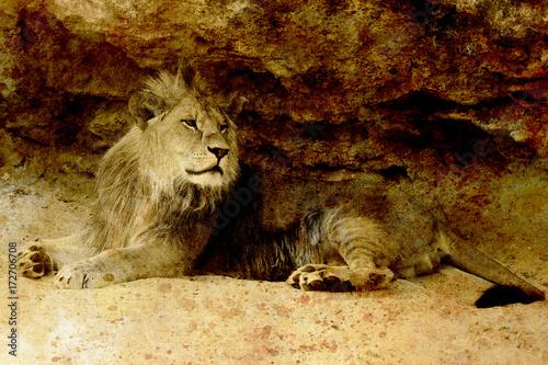 Zdjęcie XXL Piękny lew odpoczywa w świetle słonecznym. efekt sepii.