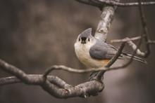Portrait Of Bird Perching On B...