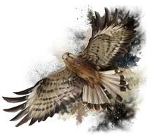 Falcon In Flight Watercolor Pa...