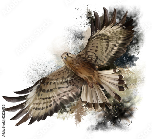 Falcon in flight watercolor painting фототапет