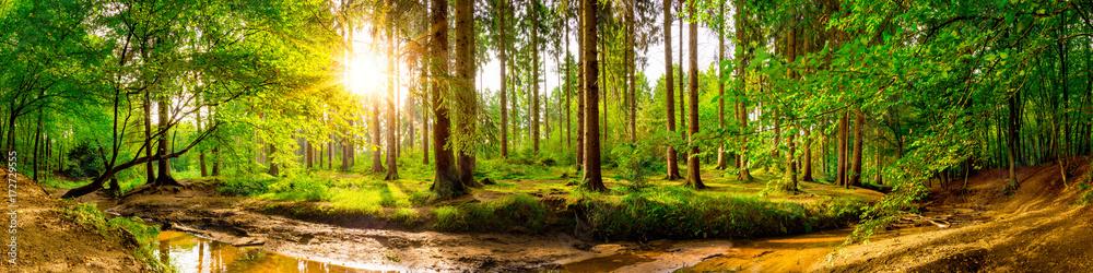 Fototapeta Beautiful forest panorama with trees, creek and sun