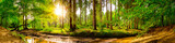 Beautiful forest panorama with trees, creek and sun