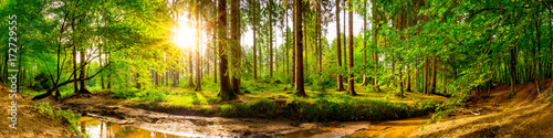 Foto auf Gartenposter Wald Beautiful forest panorama with trees, creek and sun
