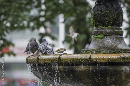 Pigeons stand on the fountain