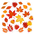 set of different autumn leaves vector illustration