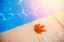 Fall Leaves Floating In Swimmi...