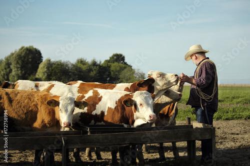 Photo фермер на пастбище кормит молодых бычков