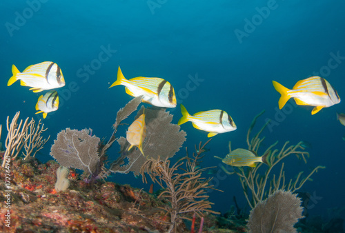 Valokuva Schooling fish on a reef in south Florida.