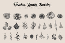 Flowers, Leaves, Berries Set. Botanical Vector Vintage Illustration. Summer Design Elements. Black And White