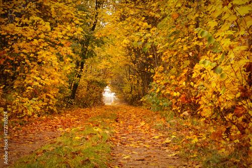 Stickers pour porte Orange eclat Autumn road