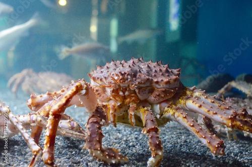 Fotografie, Tablou  Crab