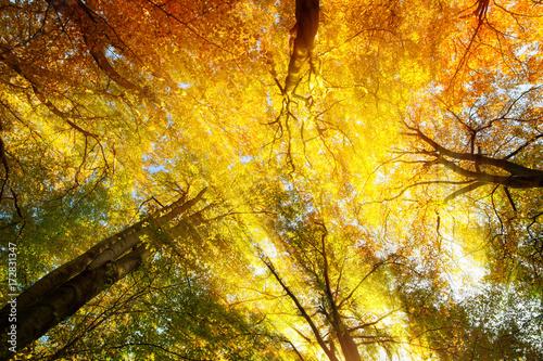 kolorowy-baldachim-z-drzew-z-cieplymi-slonecznymi-promieniami-jesienia