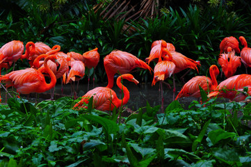 Plakat Flamingo bird in nature