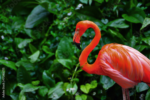 Flamingo bird in nature