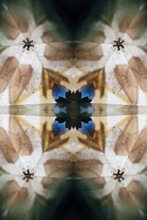 Snowflakes And Flowers In Dark Kalaidoscope's Motif