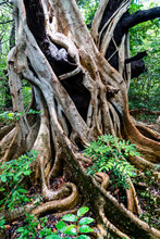 White Vines Smother Tree