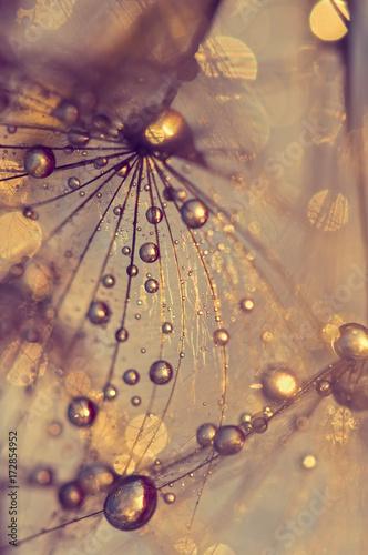 Zdjęcie XXL Abstrakcjonistyczny makro- dandelion z rosa kroplami. Złote krople.
