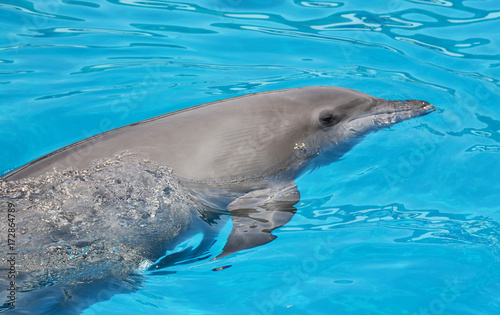 Plakat Portret delfinów