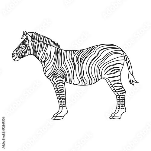 In de dag Zebra African, desert zebra. Wild cloven-hoofed animal, zebra single icon in outline style vector symbol stock illustration web.