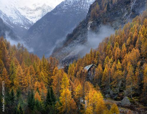 zolty-modrzew-jesienia-w-gorach-alp