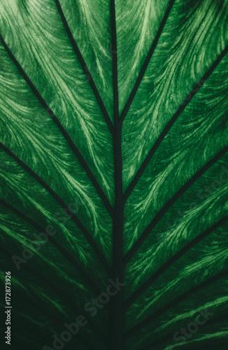 tropikalna-roslina