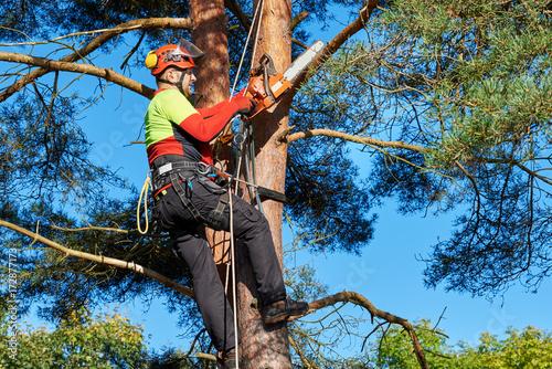 Photo Baumkletterer mit Säge und Klettergurt, Holzfäller bei der Arbeit