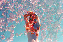 Double Exposure Of Girl Posing With Arms On Head Against Blue Sky Surrounded By Pink Flowers