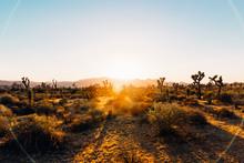 Sunset Flare Over Joshua Tree National Park Desert Landscape