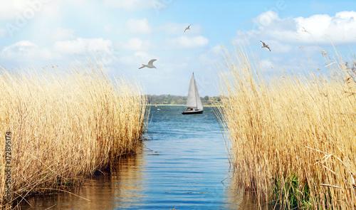 Fotografia  idyllisches Ufer der Schlei bei Schleswig mit Segelboot und Möwen