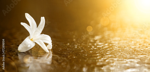 Banner of a beautiful white flower on golden background