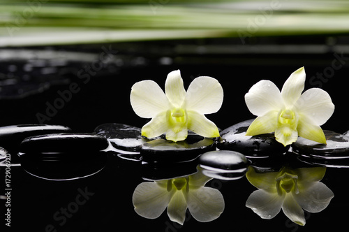 Poster Spa Still life with two white orchid with stones and green plant