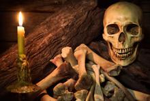 Still Life With Human Skulls A...