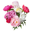 canvas print picture - A chic bouquet of peonies isolated on white background.