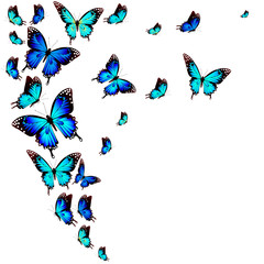 beautiful blue butterflies, isolated on a white