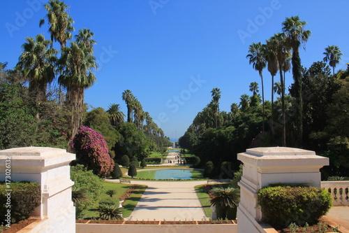 Fotobehang Tuin Le Jardin d'essai du Hamma à Alger, Algérie