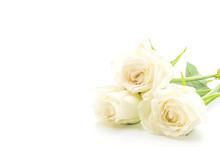 White Rose On White Background