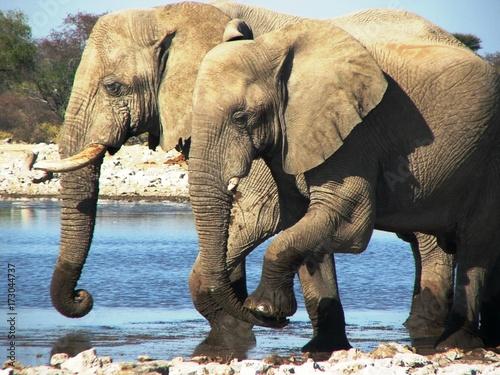 Garden Poster Elephant elephant
