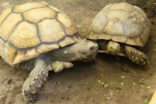 Turtles Crawling In The Zoo