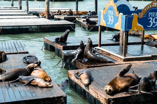 Fototapeta premium leniwe lwy morskie odpoczywają przy molo 39