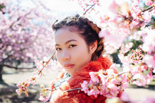 Portrait Of Pretty Young Japanese Woman Standing Next To Blossoming Sakura Tree