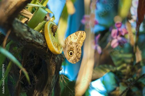 Plakat Motyl w ogrodzie