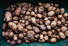 Fresh Crop Potatoes