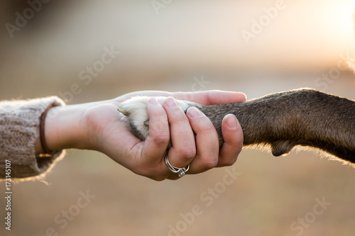 Photo Close up of dog shaking hands with her female owner.