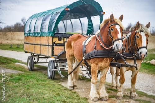 Pferdekutsche, Kremserfahrt bei Kap Arkona auf Rügen