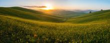 The Green Field Tuscany Italy