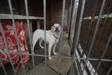 Animal Shelter - Sad White Dog...