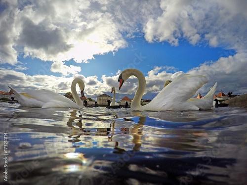 swan lake in Nymphenburg, Munich, Bavaria