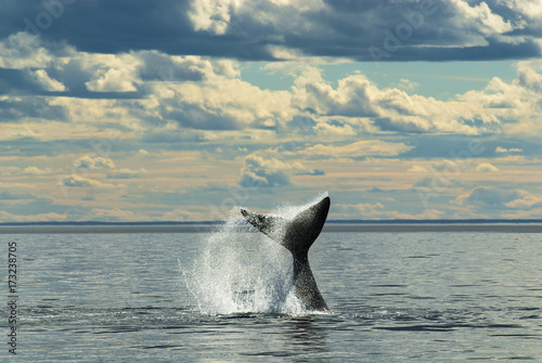 Whale Patagonia Argentina