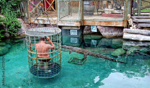 Poster de jardin Afrique du Sud Adrenaline. Man in a pool with crocodiles. Man stands inside of a cage with large holes & plunges into water with crocodiles. Stunning African adventure. Gator show.