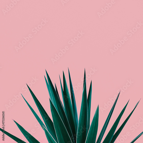 Fotobehang Bloemen Plant on pink. Tropical Greens minimal art design